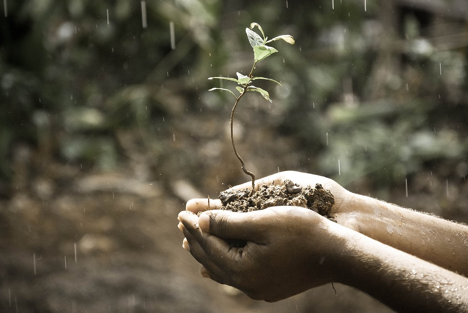 zaadje planten mensen laten groeien